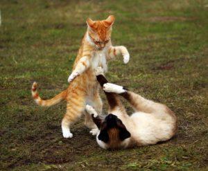 猫同士がけんかをしているイラスト